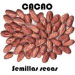 Entre los beneficios del Cacao se destacan