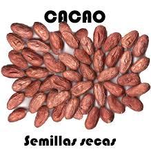 CACAO SEMILLAS SECAS